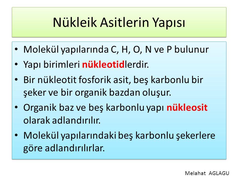 Nükleik Asitlerin Yapısı Molekül yapılarında C, H, O, N ve P bulunur Yapı birimleri nükleotidlerdir. Bir nükleotit fosforik asit, beş karbonlu bir şek