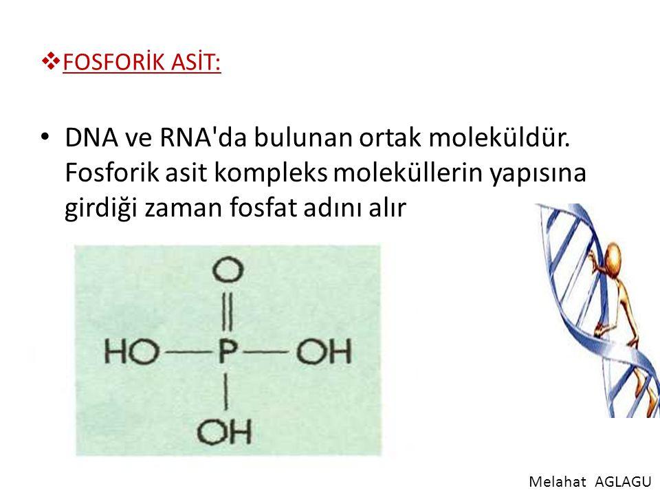  FOSFORİK ASİT: DNA ve RNA'da bulunan ortak moleküldür. Fosforik asit kompleks moleküllerin yapısına girdiği zaman fosfat adını alır MelahatAGLAGU