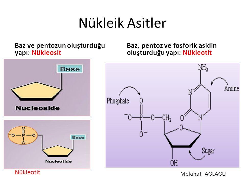 Nükleik Asitler Baz ve pentozun oluşturduğu yapı: Nükleosit Baz, pentoz ve fosforik asidin oluşturduğu yapı: Nükleotit MelahatAGLAGU Nükleotit