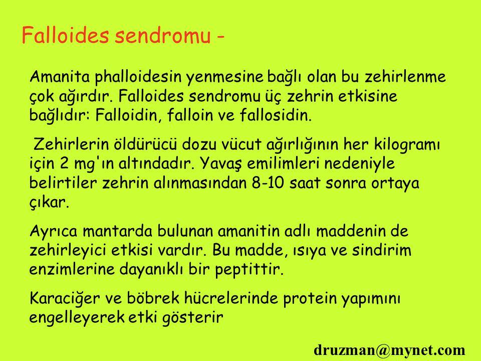 druzman@mynet.com Falloides sendromu - Amanita phalloidesin yenmesine bağlı olan bu zehirlenme çok ağırdır. Falloides sendromu üç zehrin etkisine bağl