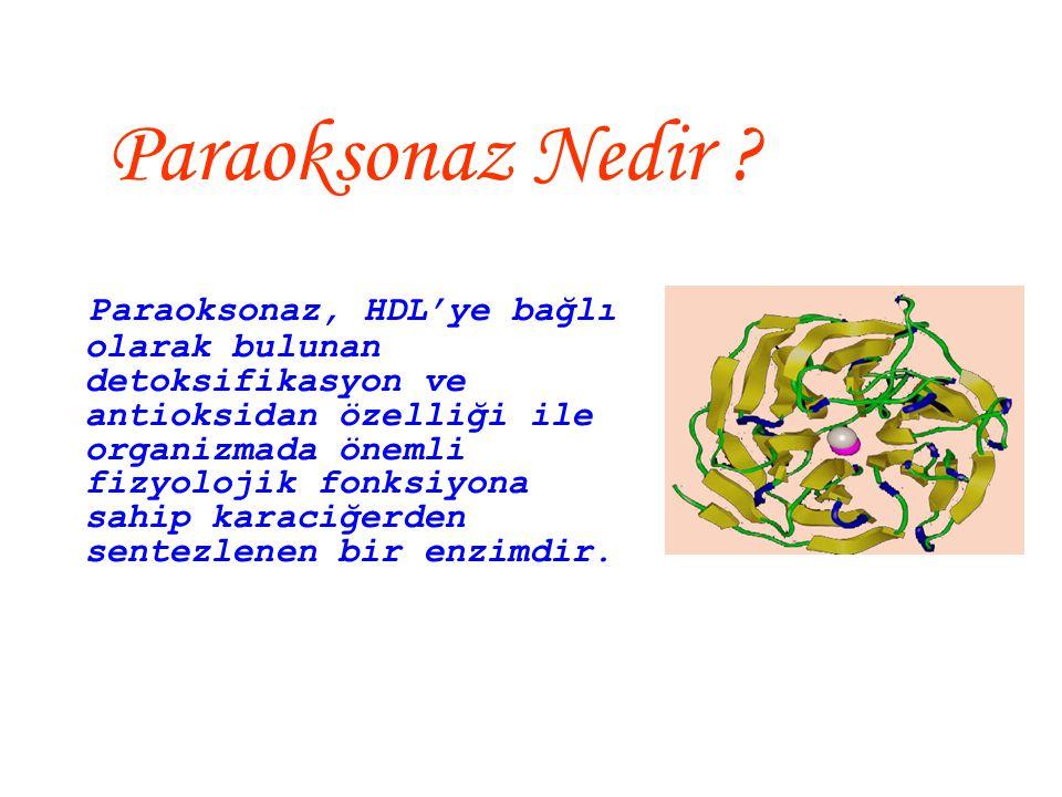Adlandırılması 'paraokson'  Enzim aktivitesi ölçümünde yaygın olarak kullanılan substrat 'paraokson'dur.