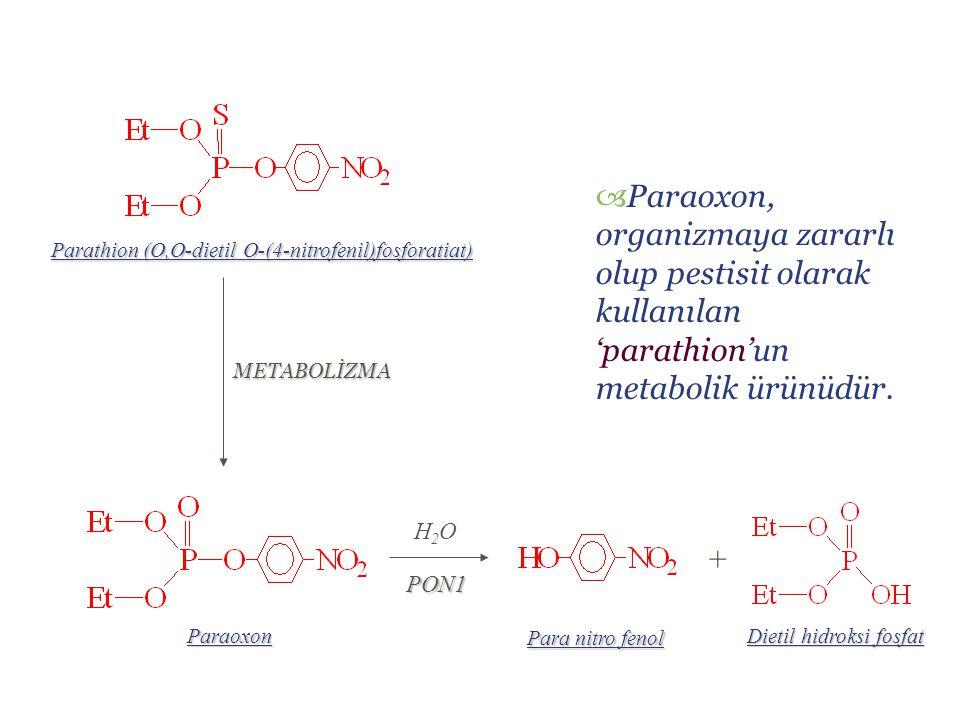 Parathion (O,O-dietil O-(4-nitrofenil)fosforatiat) METABOLİZMA Paraoxon Dietil hidroksi fosfat Para nitro fenol +  Paraoxon, organizmaya zararlı olup pestisit olarak kullanılan 'parathion'un metabolik ürünüdür.