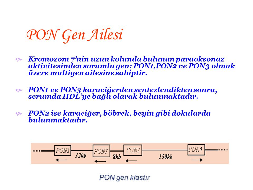  43-45 kDa molekül ağırlığında kütleye sahip bir glikoproteindir.