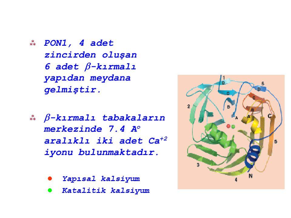  Paraokson substrat olarak kullanıldığında R alel yüksek, Q alel düşük aktivite göstermektedir.