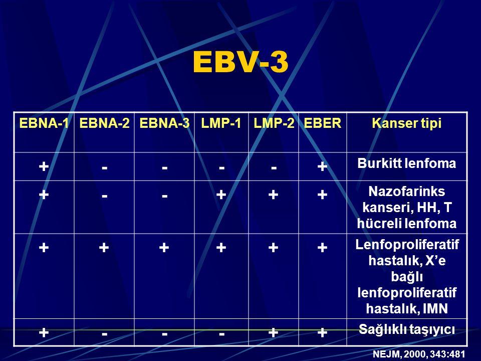 EBV-3 EBNA-1EBNA-2EBNA-3LMP-1LMP-2EBERKanser tipi +----+ Burkitt lenfoma +--+++ Nazofarinks kanseri, HH, T hücreli lenfoma ++++++ Lenfoproliferatif hastalık, X'e bağlı lenfoproliferatif hastalık, IMN +---++ Sağlıklı taşıyıcı NEJM, 2000, 343:481