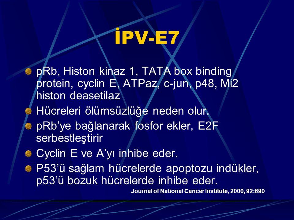 İPV-E7 pRb, Histon kinaz 1, TATA box binding protein, cyclin E, ATPaz, c-jun, p48, Mi2 histon deasetilaz Hücreleri ölümsüzlüğe neden olur.