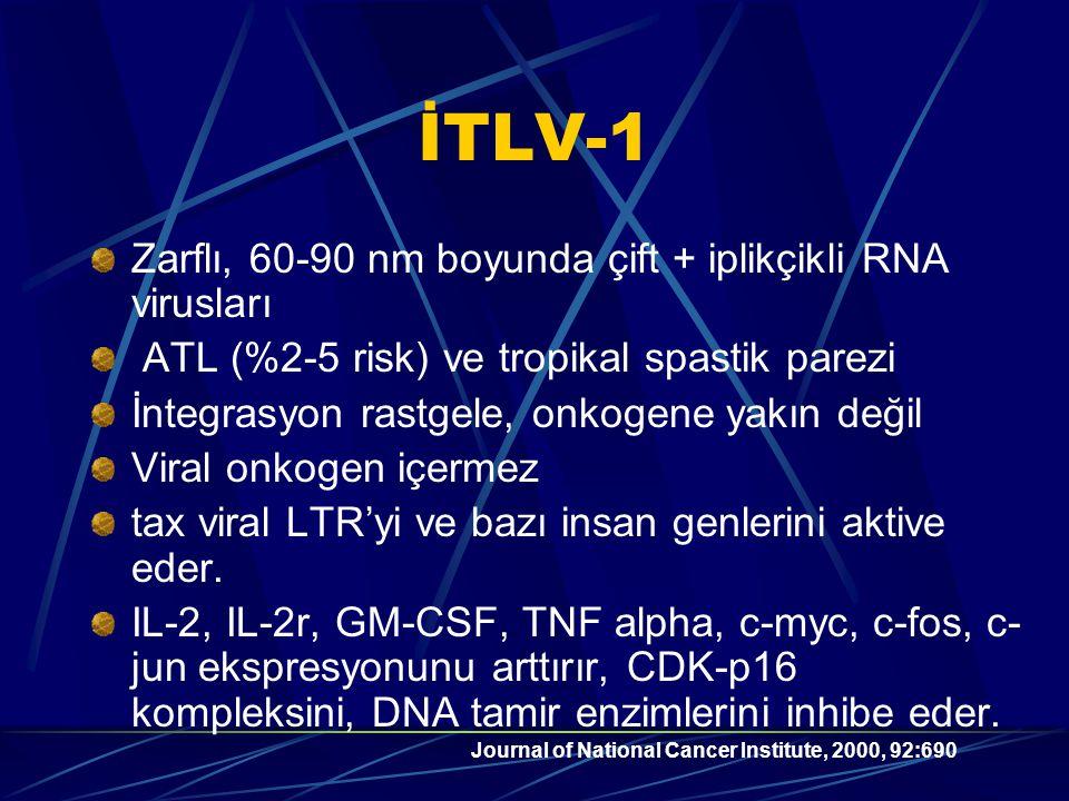 İTLV-1 Zarflı, 60-90 nm boyunda çift + iplikçikli RNA virusları ATL (%2-5 risk) ve tropikal spastik parezi İntegrasyon rastgele, onkogene yakın değil Viral onkogen içermez tax viral LTR'yi ve bazı insan genlerini aktive eder.