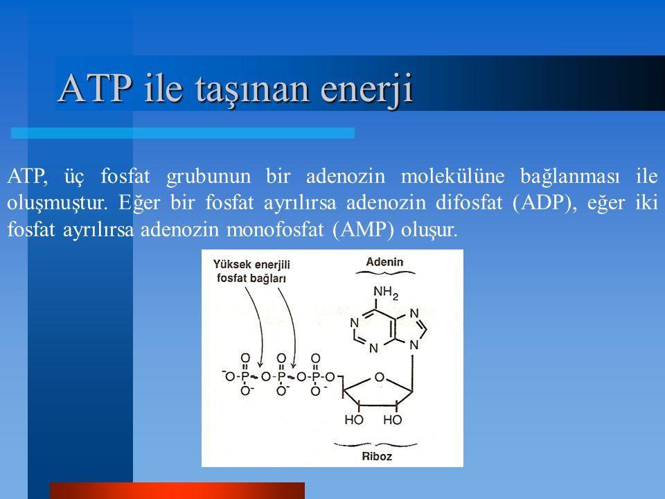 ATP ile taşınan enerji ATP, üç fosfat grubunun bir adenozin molekülüne bağlanması ile oluşmuştur. Eğer bir fosfat ayrılırsa adenozin difosfat (ADP), e