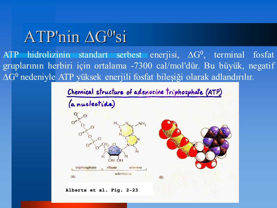 ATP'nin  G 0 'si ATP hidrolizinin standart serbest enerjisi,  G 0, terminal fosfat gruplarının herbiri için ortalama -7300 cal/mol'dür. Bu büyük, ne