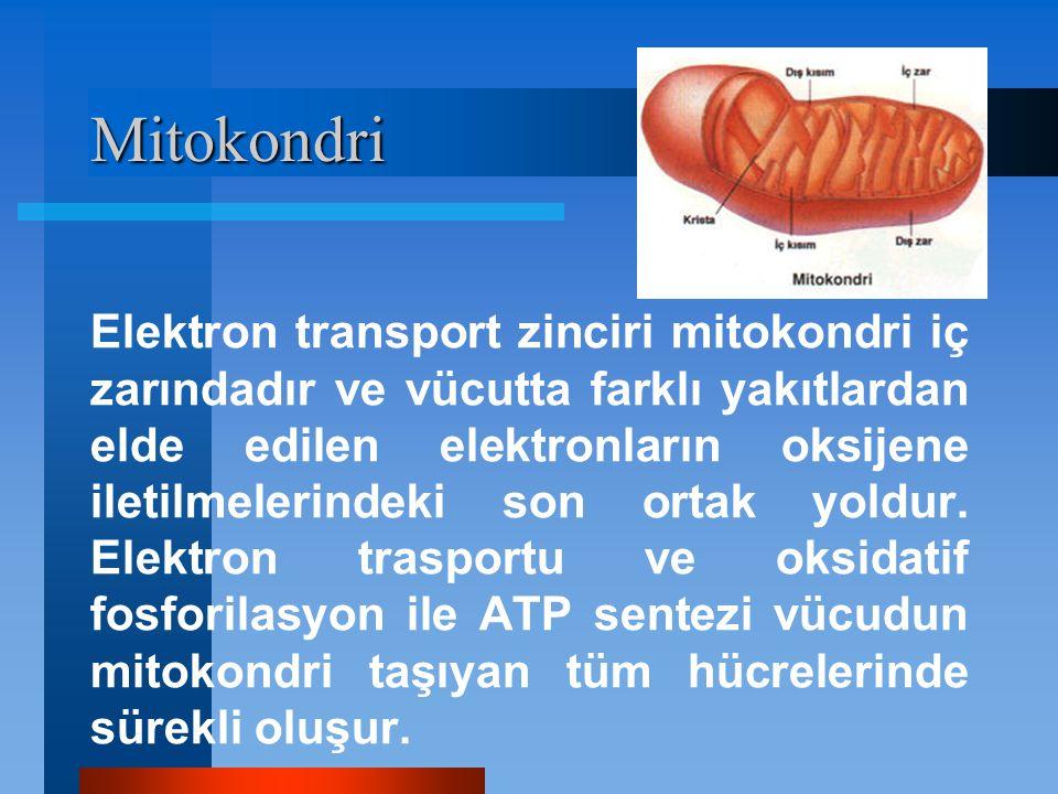Mitokondri Elektron transport zinciri mitokondri iç zarındadır ve vücutta farklı yakıtlardan elde edilen elektronların oksijene iletilmelerindeki son