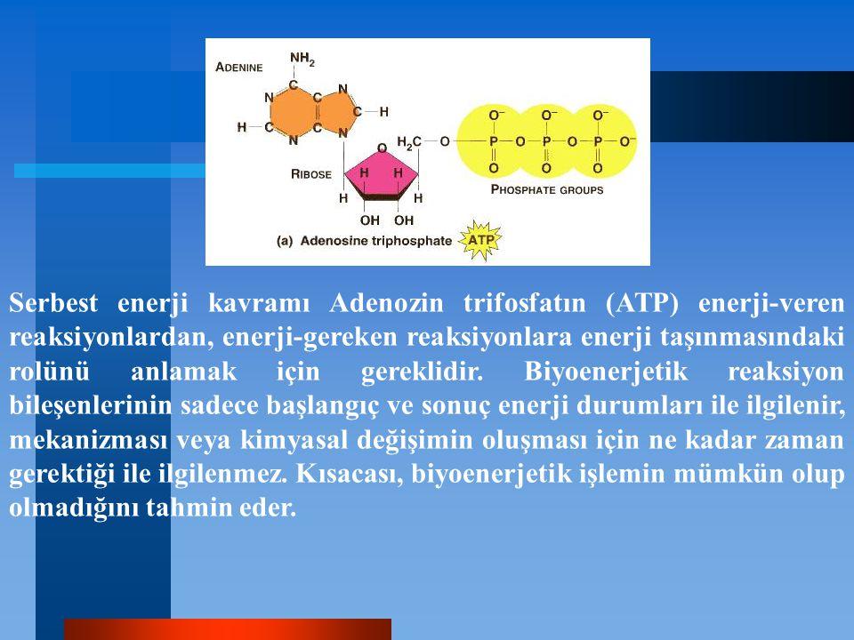 Serbest enerji kavramı Adenozin trifosfatın (ATP) enerji-veren reaksiyonlardan, enerji-gereken reaksiyonlara enerji taşınmasındaki rolünü anlamak için
