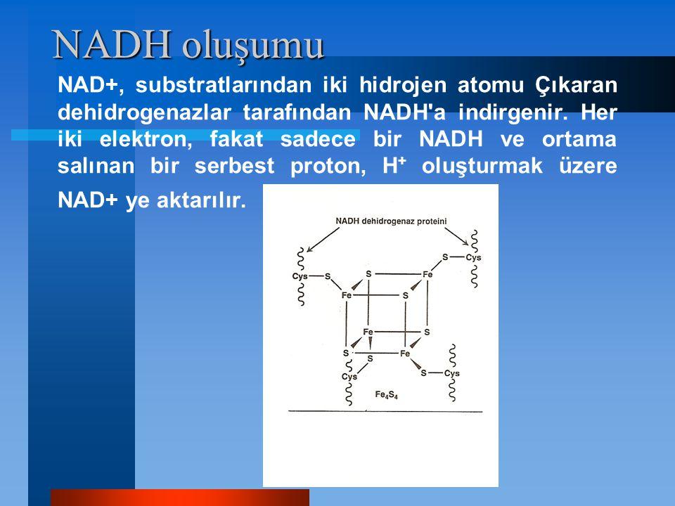 NADH oluşumu NAD+, substratlarından iki hidrojen atomu Çıkaran dehidrogenazlar tarafından NADH'a indirgenir. Her iki elektron, fakat sadece bir NADH v