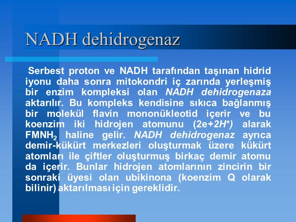 NADH dehidrogenaz Serbest proton ve NADH tarafından taşınan hidrid iyonu daha sonra mitokondri iç zarında yerleşmiş bir enzim kompleksi olan NADH dehi