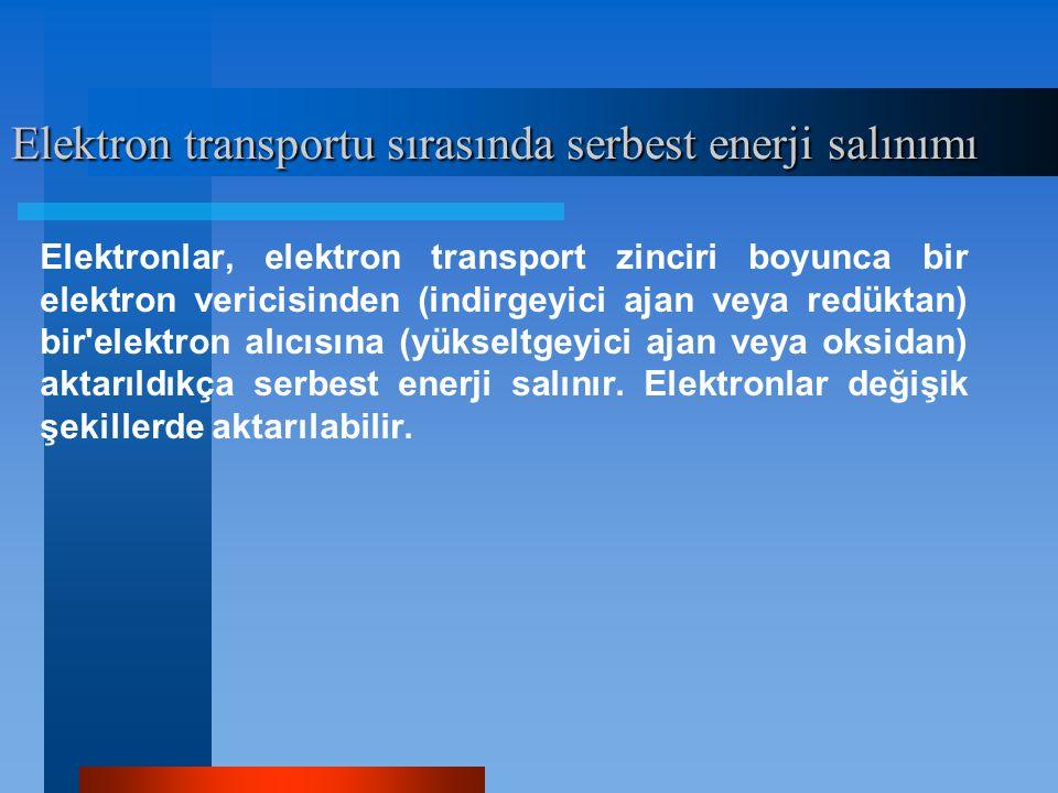 Elektron transportu sırasında serbest enerji salınımı Elektronlar, elektron transport zinciri boyunca bir elektron vericisinden (indirgeyici ajan veya