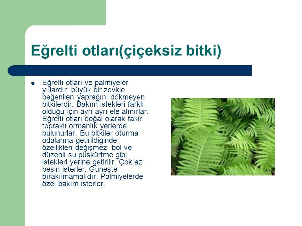 Eğrelti otları(çiçeksiz bitki) Eğrelti otları ve palmiyeler yıllardır büyük bir zevkle beğenilen yaprağını dökmeyen bitkilerdir. Bakım istekleri farkl