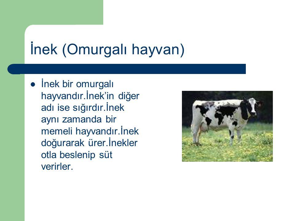 İnek (Omurgalı hayvan) İnek bir omurgalı hayvandır.İnek'in diğer adı ise sığırdır.İnek aynı zamanda bir memeli hayvandır.İnek doğurarak ürer.İnekler o