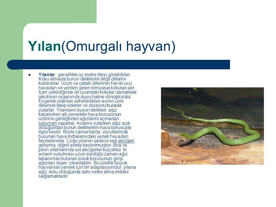 Yılan(Omurgalı hayvan) Yılanlar, genellikle üç metre öteyi görebilirler. Koku almada burun deliklerini değil dillerini kullanırlar. Uzun ve çatallı di