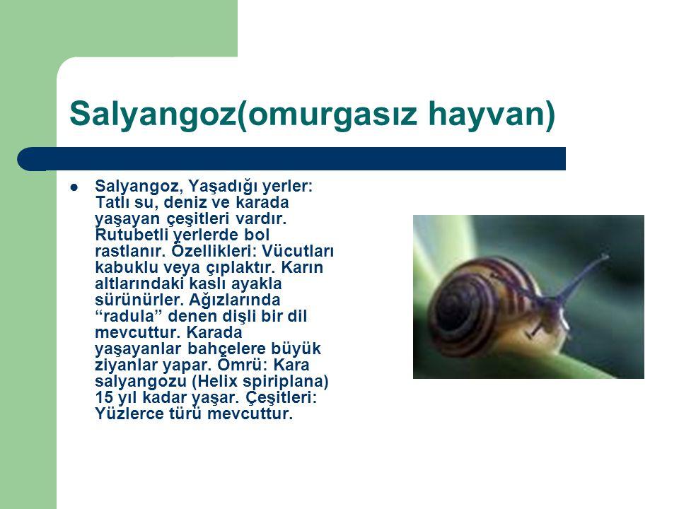 Salyangoz(omurgasız hayvan) Salyangoz, Yaşadığı yerler: Tatlı su, deniz ve karada yaşayan çeşitleri vardır. Rutubetli yerlerde bol rastlanır. Özellikl