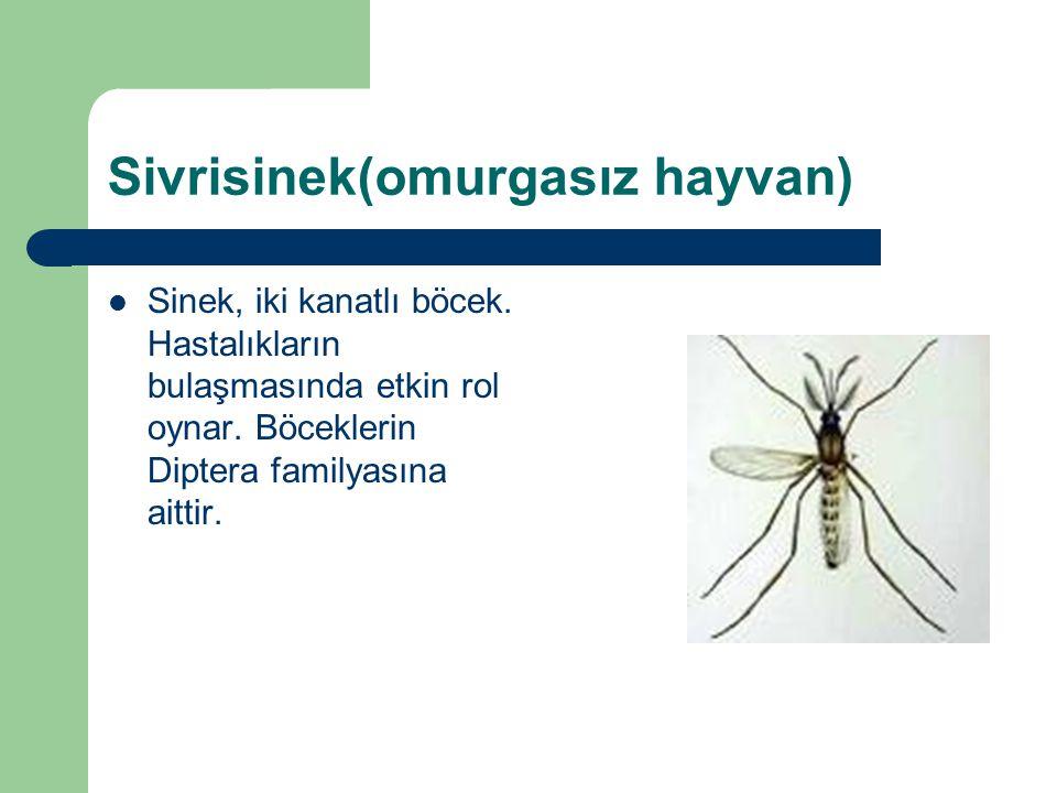 Sivrisinek(omurgasız hayvan) Sinek, iki kanatlı böcek. Hastalıkların bulaşmasında etkin rol oynar. Böceklerin Diptera familyasına aittir.