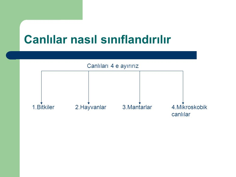 Canlılar nasıl sınıflandırılır Canlıları 4 e ayırırız 1.Bitkiler2.Hayvanlar3.Mantarlar4.Mikroskobik canlılar