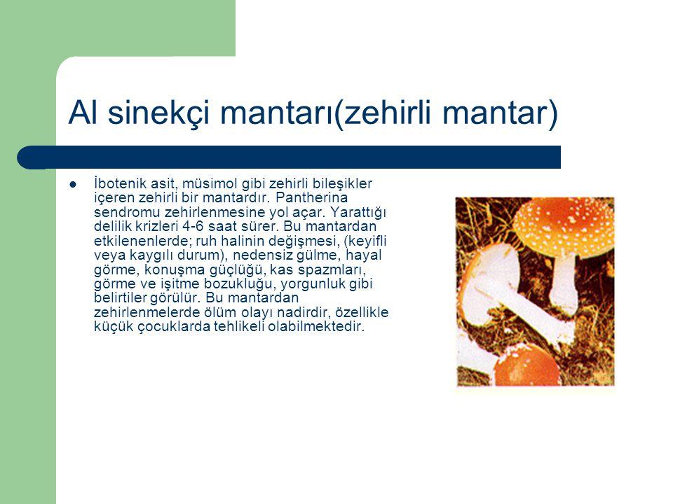 Al sinekçi mantarı(zehirli mantar) İbotenik asit, müsimol gibi zehirli bileşikler içeren zehirli bir mantardır. Pantherina sendromu zehirlenmesine yol