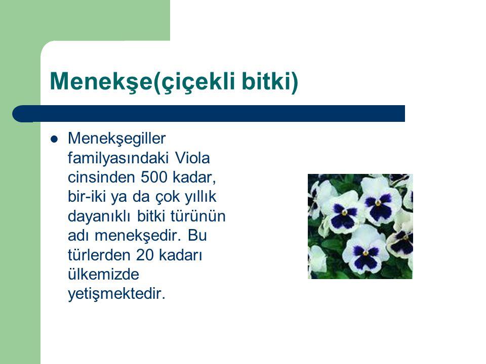 Menekşe(çiçekli bitki) Menekşegiller familyasındaki Viola cinsinden 500 kadar, bir-iki ya da çok yıllık dayanıklı bitki türünün adı menekşedir. Bu tür