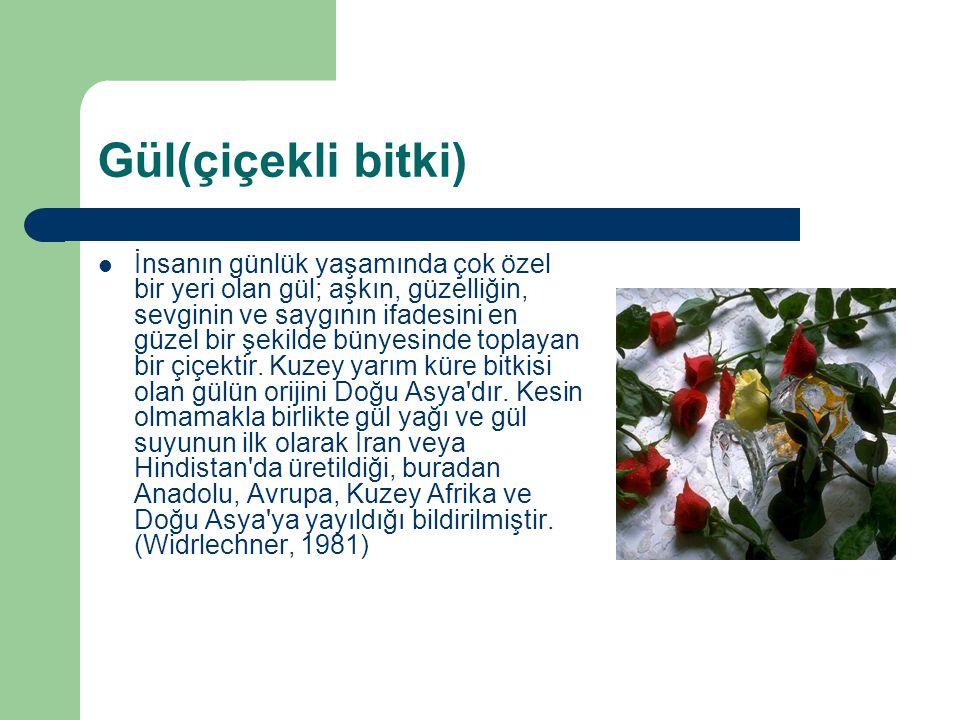 Gül(çiçekli bitki) İnsanın günlük yaşamında çok özel bir yeri olan gül; aşkın, güzelliğin, sevginin ve saygının ifadesini en güzel bir şekilde bünyesi