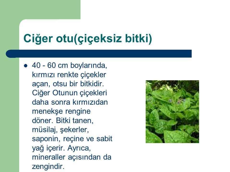 Ciğer otu(çiçeksiz bitki) 40 - 60 cm boylarında, kırmızı renkte çiçekler açan, otsu bir bitkidir. Ciğer Otunun çiçekleri daha sonra kırmızıdan menekşe