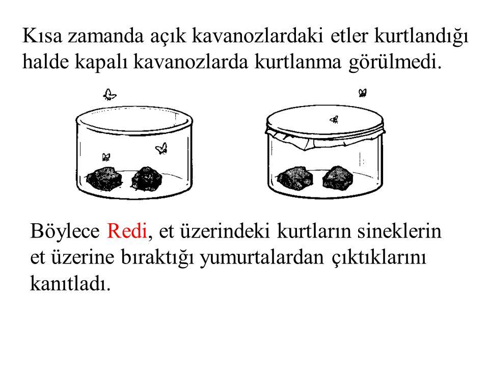 Böylece Redi, et üzerindeki kurtların sineklerin et üzerine bıraktığı yumurtalardan çıktıklarını kanıtladı. Kısa zamanda açık kavanozlardaki etler kur