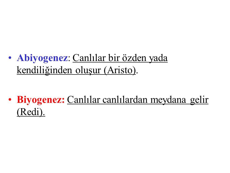 Abiyogenez: Canlılar bir özden yada kendiliğinden oluşur (Aristo). Biyogenez: Canlılar canlılardan meydana gelir (Redi).