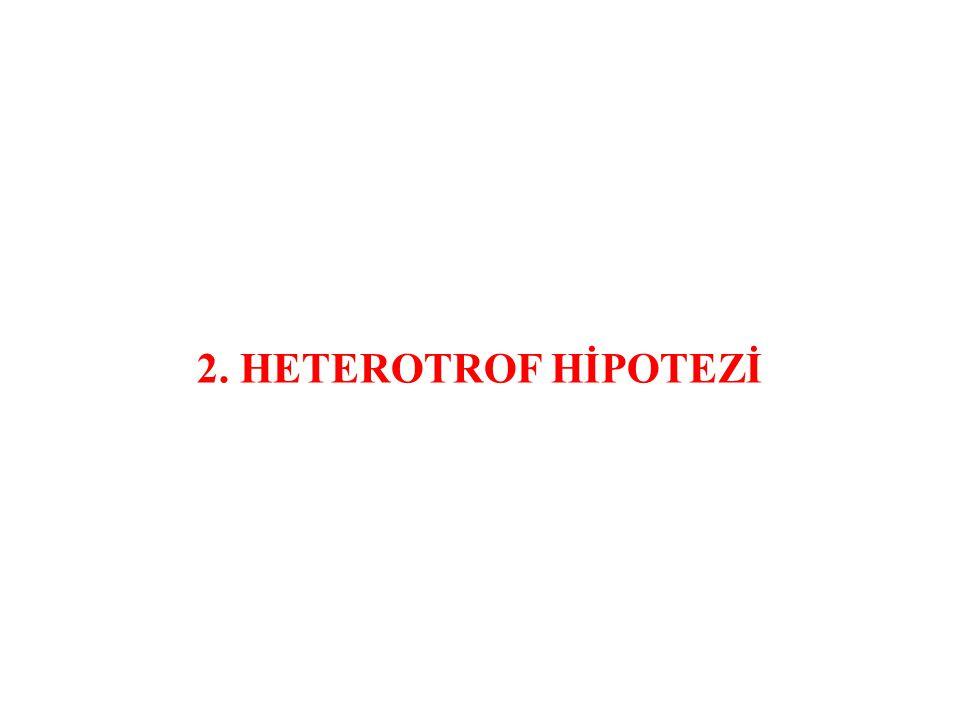 2. HETEROTROF HİPOTEZİ