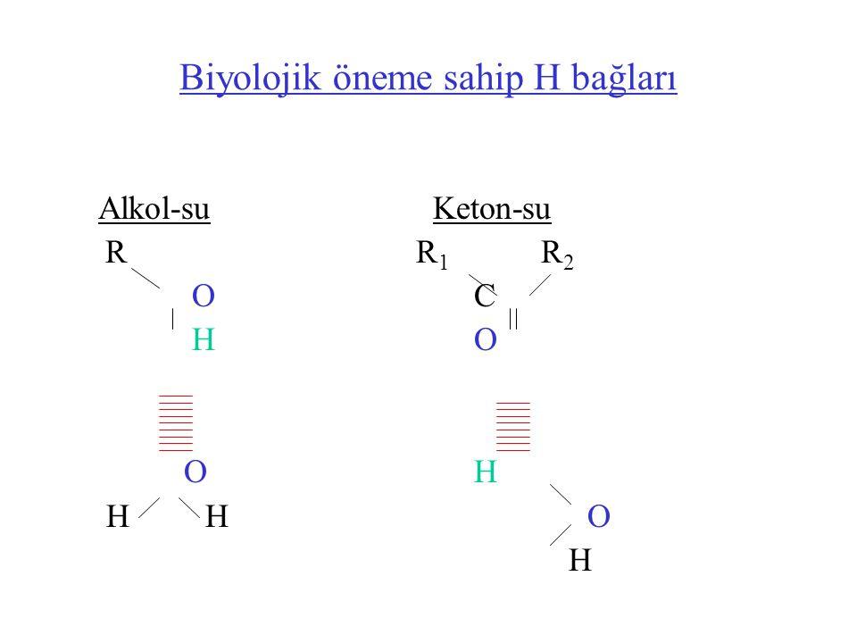 Biyolojik öneme sahip H bağları Alkol-su Keton-su RR 1 R 2 O C H O O H H HO H