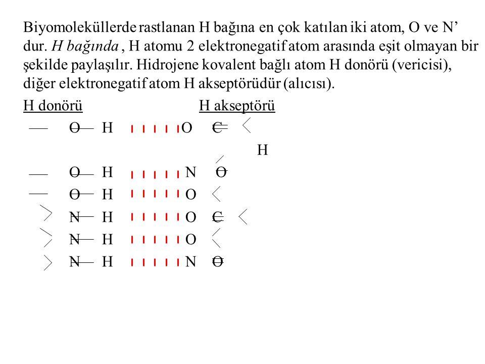 Biyomoleküllerde rastlanan H bağına en çok katılan iki atom, O ve N' dur. H bağında, H atomu 2 elektronegatif atom arasında eşit olmayan bir şekilde p