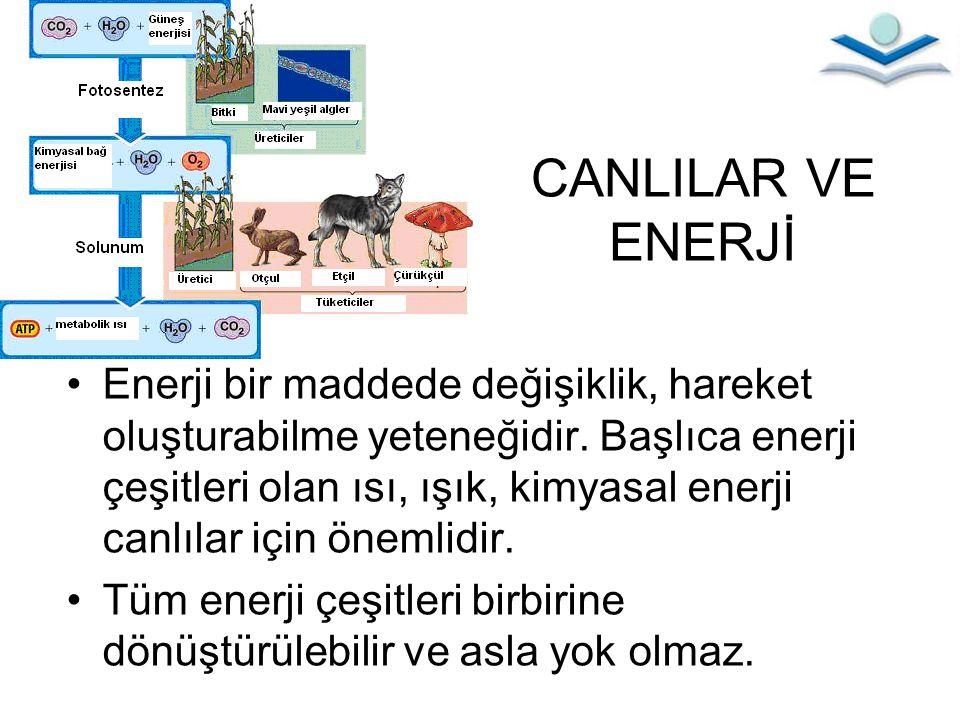 CANLILAR VE ENERJİ Enerji bir maddede değişiklik, hareket oluşturabilme yeteneğidir. Başlıca enerji çeşitleri olan ısı, ışık, kimyasal enerji canlılar