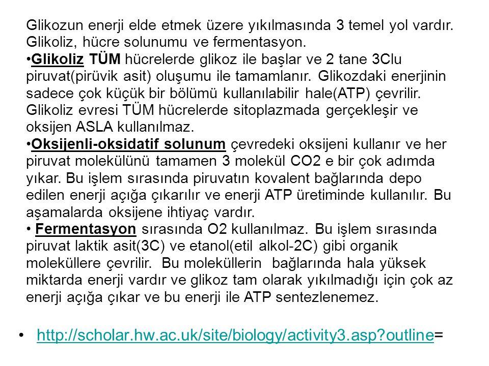 http://scholar.hw.ac.uk/site/biology/activity3.asp?outline=http://scholar.hw.ac.uk/site/biology/activity3.asp?outline Glikozun enerji elde etmek üzere