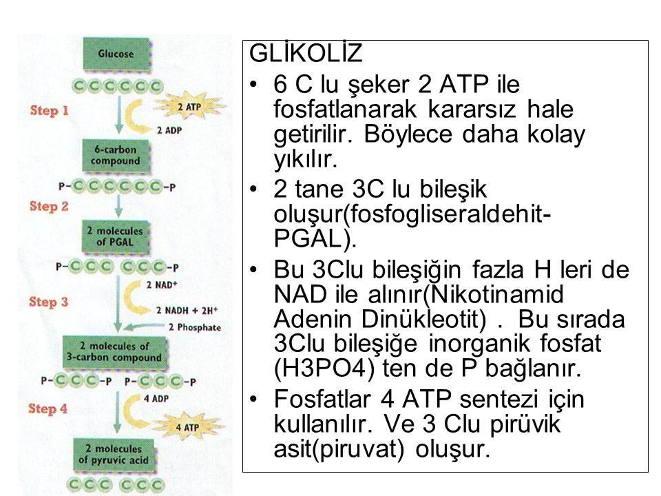 GLİKOLİZ 6 C lu şeker 2 ATP ile fosfatlanarak kararsız hale getirilir. Böylece daha kolay yıkılır. 2 tane 3C lu bileşik oluşur(fosfogliseraldehit- PGA