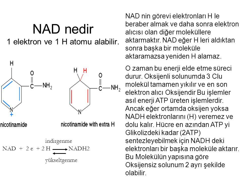 NAD nedir 1 elektron ve 1 H atomu alabilir. NAD nin görevi elektronları H le beraber almak ve daha sonra elektron alıcısı olan diğer moleküllere aktar