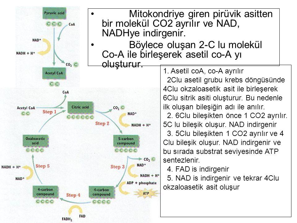 Mitokondriye giren pirüvik asitten bir molekül CO2 ayrılır ve NAD, NADHye indirgenir. Böylece oluşan 2-C lu molekül Co-A ile birleşerek asetil co-A yı