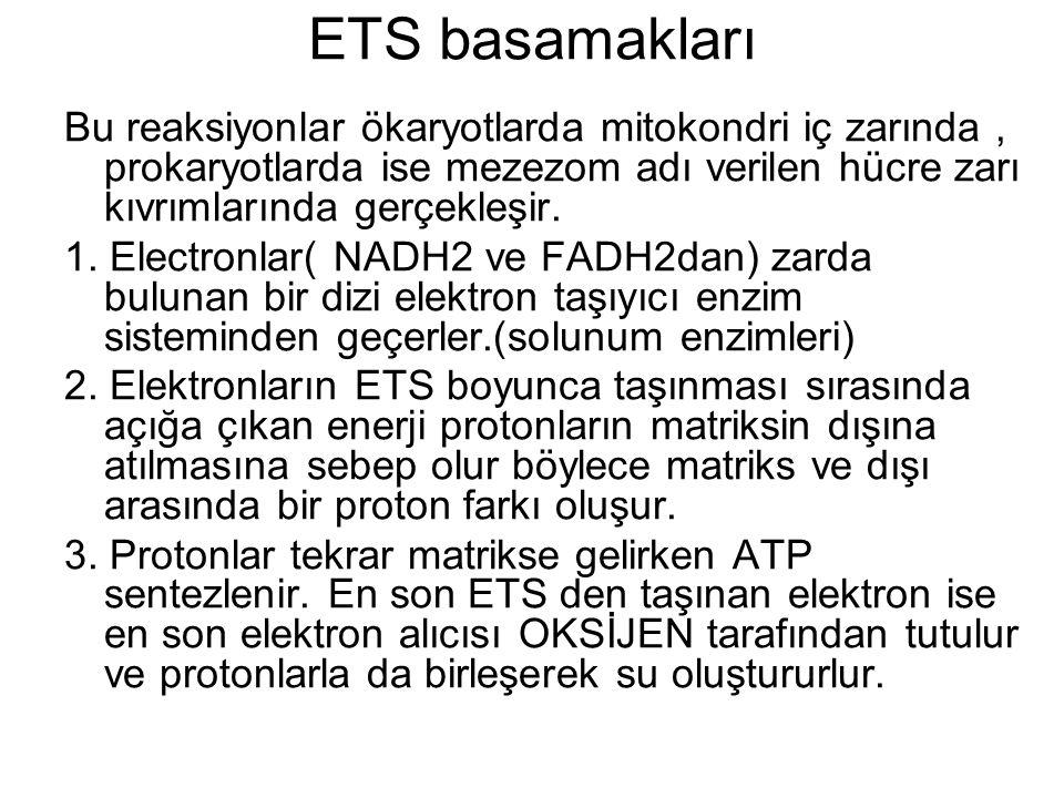 ETS basamakları Bu reaksiyonlar ökaryotlarda mitokondri iç zarında, prokaryotlarda ise mezezom adı verilen hücre zarı kıvrımlarında gerçekleşir. 1. El