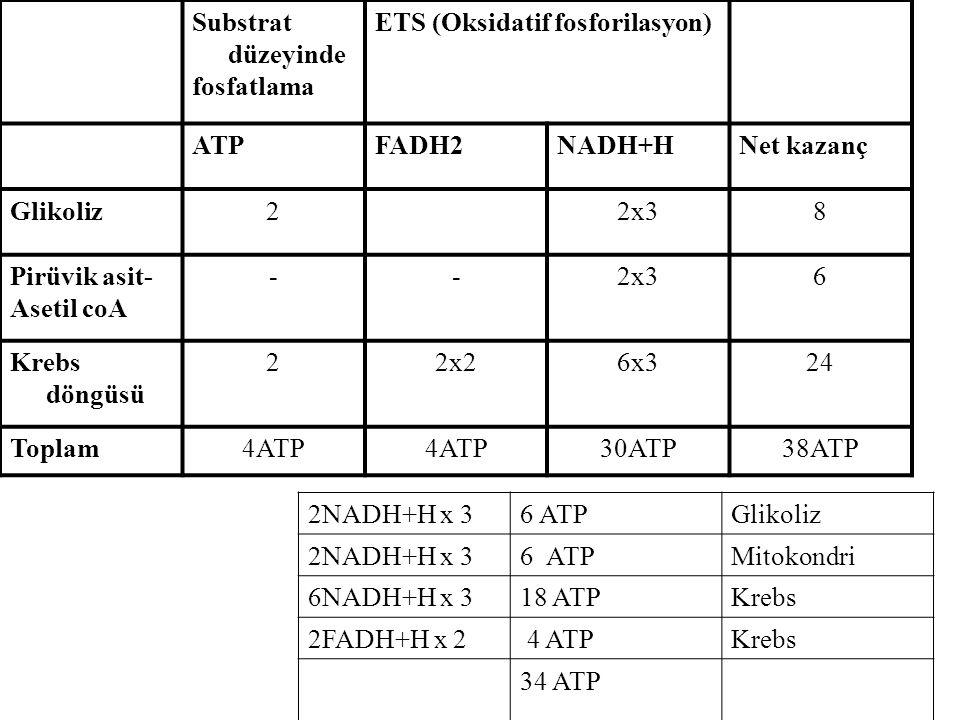 Substrat düzeyinde fosfatlama ETS (Oksidatif fosforilasyon) ATPFADH2NADH+HNet kazanç Glikoliz22x38 Pirüvik asit- Asetil coA --2x36 Krebs döngüsü 22x26