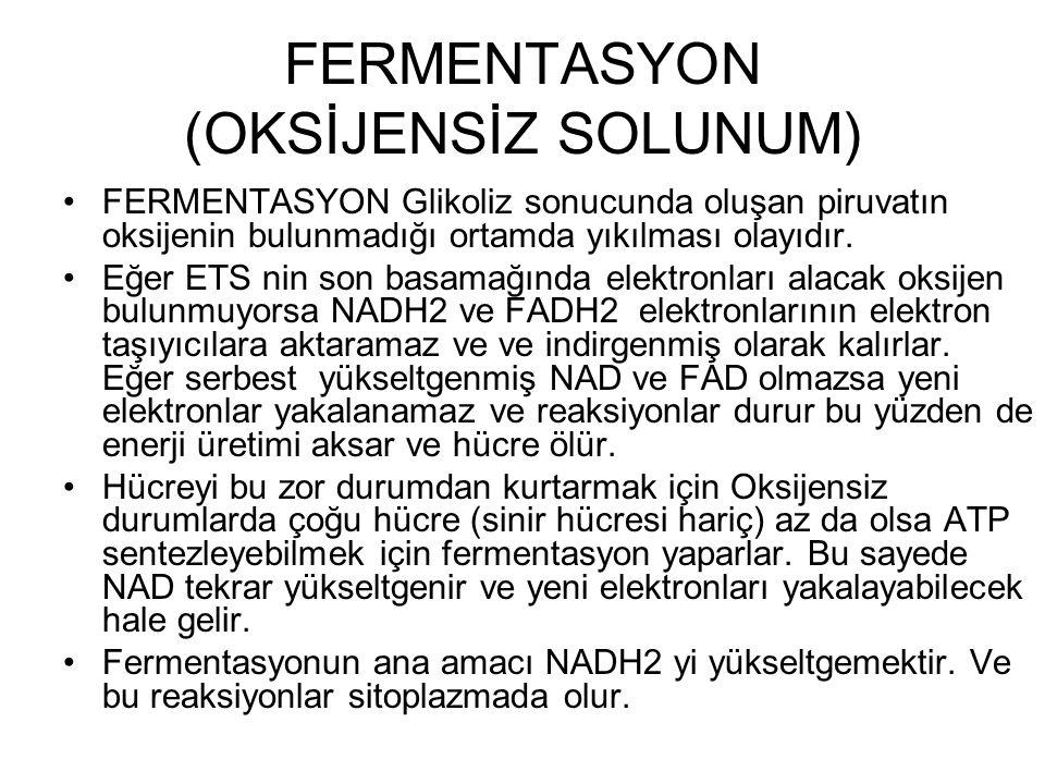 FERMENTASYON (OKSİJENSİZ SOLUNUM) FERMENTASYON Glikoliz sonucunda oluşan piruvatın oksijenin bulunmadığı ortamda yıkılması olayıdır. Eğer ETS nin son