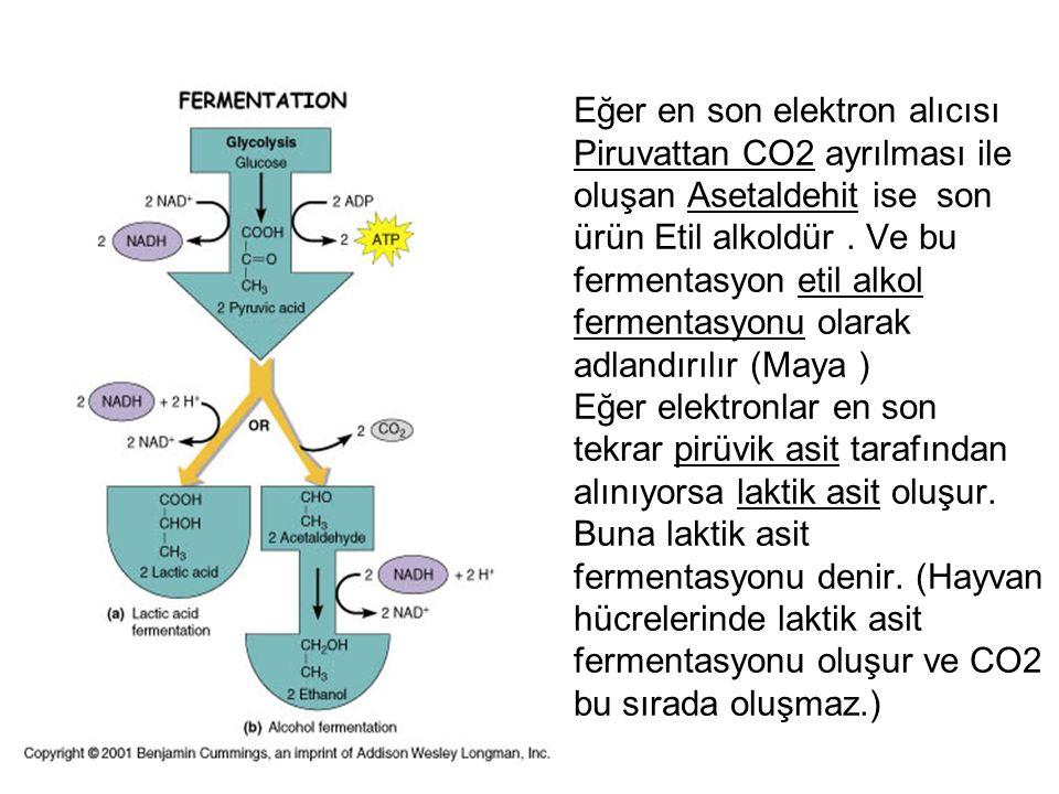 Eğer en son elektron alıcısı Piruvattan CO2 ayrılması ile oluşan Asetaldehit ise son ürün Etil alkoldür. Ve bu fermentasyon etil alkol fermentasyonu o