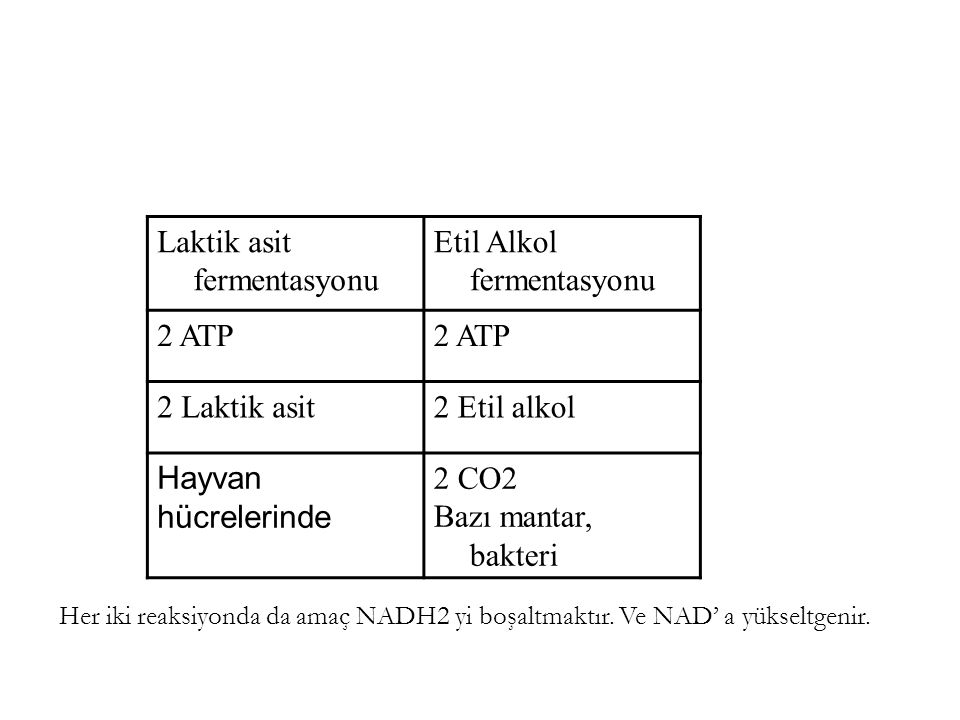 Laktik asit fermentasyonu Etil Alkol fermentasyonu 2 ATP 2 Laktik asit2 Etil alkol Hayvan hücrelerinde 2 CO2 Bazı mantar, bakteri Her iki reaksiyonda
