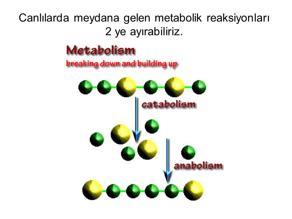 Canlılarda meydana gelen metabolik reaksiyonları 2 ye ayırabiliriz.