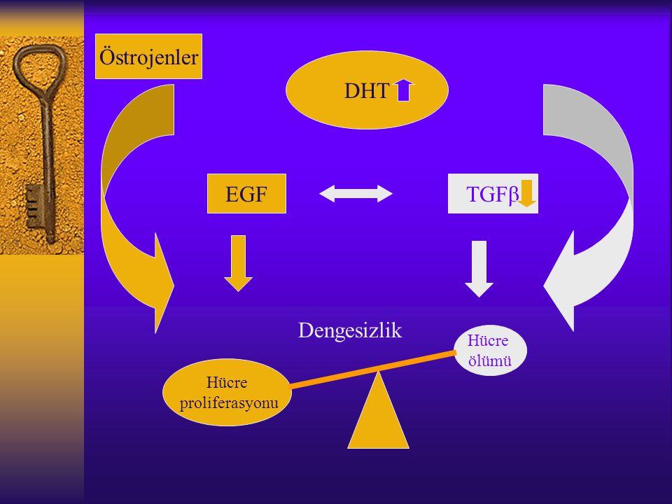 DHT EGFTGFβ Hücre proliferasyonu Hücre ölümü Dengesizlik Östrojenler