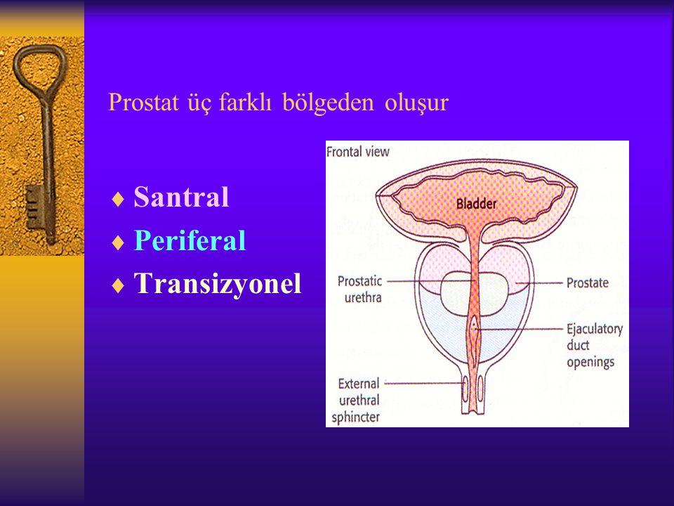 Prostat üç farklı bölgeden oluşur  Santral  Periferal  Transizyonel