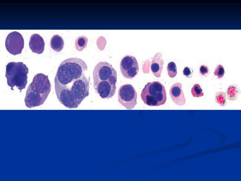 Myeloid Hücreler Hastaların yaklaşık olarak %50'sinde nötropeni görülür.