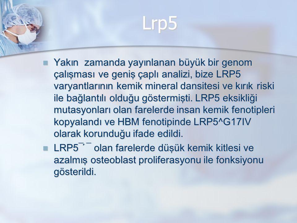Lrp5 Yakın zamanda yayınlanan büyük bir genom çalışması ve geniş çaplı analizi, bize LRP5 varyantlarının kemik mineral dansitesi ve kırık riski ile ba