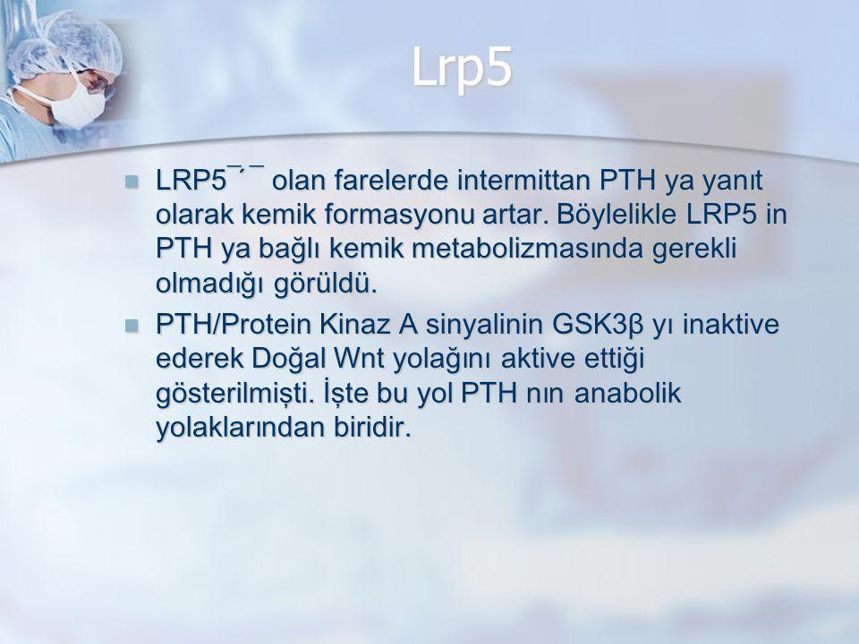 Lrp5 LRP5¯ ́¯ olan farelerde intermittan PTH ya yanıt olarak kemik formasyonu artar. Böylelikle LRP5 in PTH ya bağlı kemik metabolizmasında gerekli ol