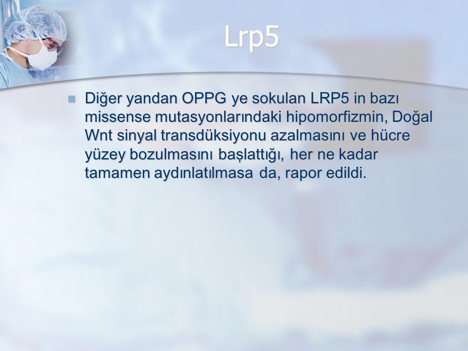 Lrp5 Diğer yandan OPPG ye sokulan LRP5 in bazı missense mutasyonlarındaki hipomorfizmin, Doğal Wnt sinyal transdüksiyonu azalmasını ve hücre yüzey bozulmasını başlat t ığı, her ne kadar tamamen aydınlatılmasa da, rapor edildi.